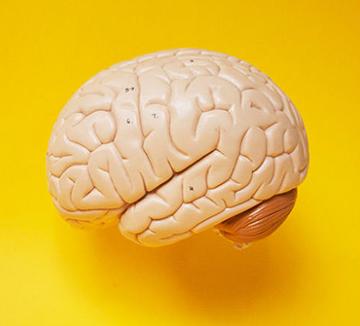 우리 몸에 뇌가 2개라고?