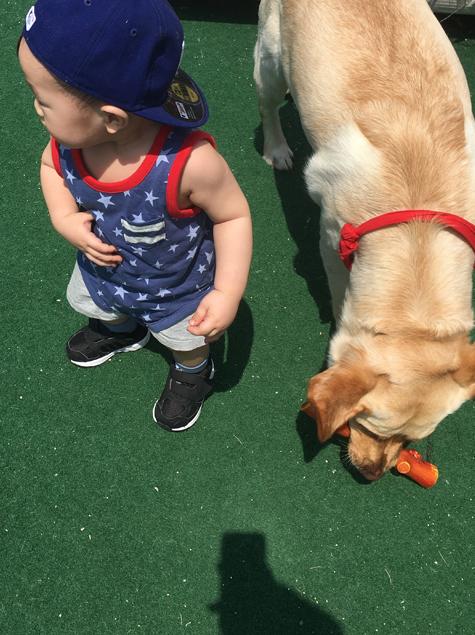 '개육아' 개가 아기를 질투한다?