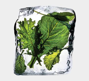 들어가기만 하면 죽어 나오는 냉장고를 갖고 있다고? 그렇다면 이제부터 얼리자!