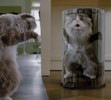 우리 고양이의 몸개그엔 다 이유가 있었다. ::영화, 판타지, 코믹, 고양이, 반려묘, 미스터캣, 세상에서_고양이가_사라진다면, 어떻게_헤어질까, 코스모폴리탄, COSMOPOLITAN