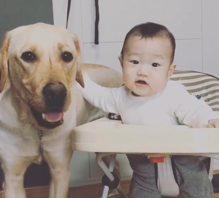 애도 키우고 개도 키우는 워킹맘 이야기 ::아기, 개, 육아, 워킹맘, 리트리버, 아기와개, 개육아, 대형견, 신생아, 코스모폴리탄, COSMOPOLITAN