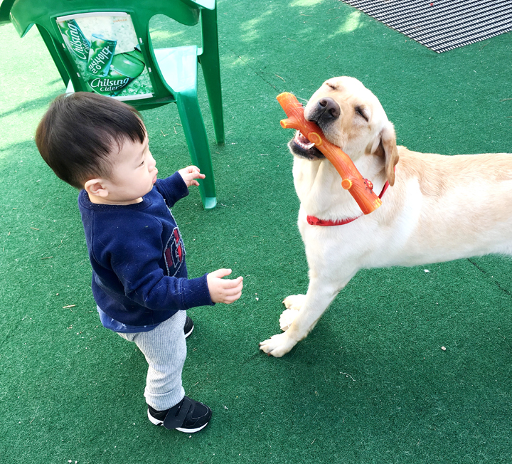 애도 키우고 개도 키우는 워킹맘의 세번째 이야기 ::아기, 개, 육아, 워킹맘, 리트리버, 아기와개, 개육아, 대형견, 신생아, 코스모폴리탄, COSMOPOLITAN