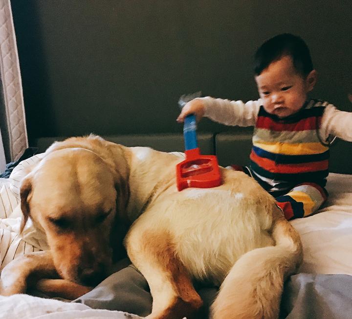 애도 키우고 개도 키우는 워킹맘의 네번째 이야기 ::아기, 개, 육아, 워킹맘, 리트리버, 아기와개, 개육아, 대형견, 신생아, 코스모폴리탄, COSMOPOLITAN