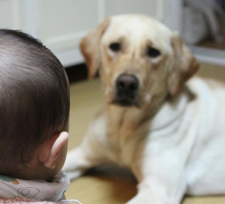 애도 키우고 개도 키우는 워킹맘의 다섯 번째 이야기 ::아기, 개, 육아, 워킹맘, 리트리버, 아기와개, 개육아, 대형견, 신생아, 코스모폴리탄, COSMOPOLITAN