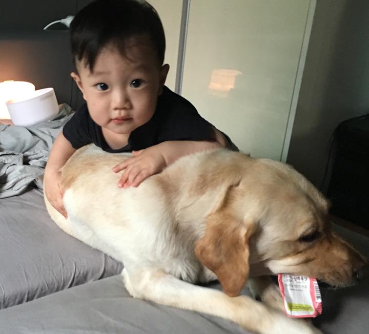 애도 키우고 개도 키우는 워킹맘의 여섯 번째 이야기 ::아기, 개, 육아, 워킹맘, 리트리버, 아기와개, 개육아, 대형견, 신생아, 코스모폴리탄, COSMOPOLITAN