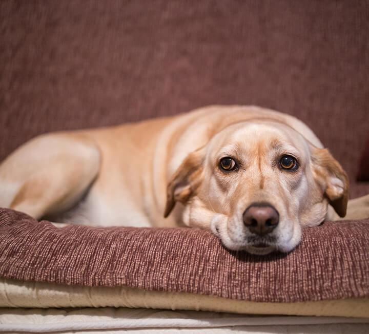반려동물 인구 1천만 시대, 인간과 개가 함께 살아가기 위한 더 나은 방법은 없을까?