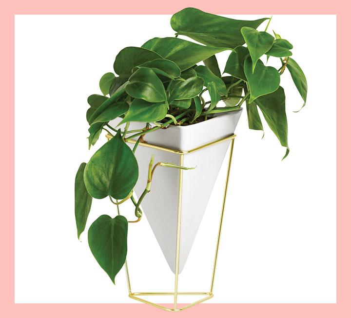 서울 미세먼지의 42%를 숲이 흡수한다고 한다. 공기를 정화하고 실내 습도를 높여 호흡기와 피부 건강에 일조하는 게 바로 식물이다. 돌보는 게 일이라고? 오히려 당신의 삶을 건강하게 가꿔줄 일등 공신 3종을 소개한다.