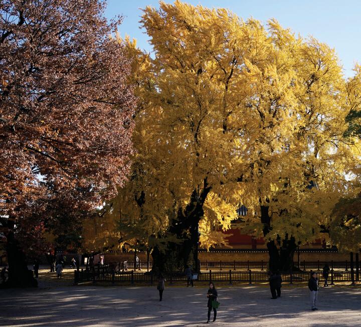 어느 도시나 절정의 풍경을 자랑하는 특별한 계절이 있다. 여행 전문가들이 가을에 더 아름다운 국내의 매력적인 여행지와 알차게 즐기는 방법을 콕 짚어줬다.